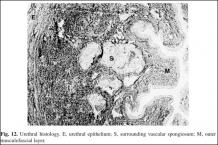 Urethral  histology